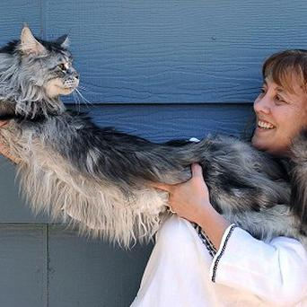 Robin Henderson stretches out her cat Stewie outside of her home in Reno, Nevada
