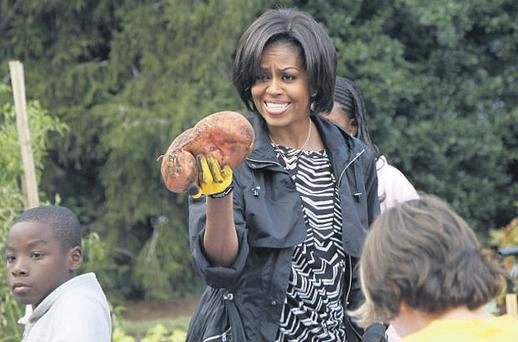HOT POTATO: Michelle Obama tends the White House kitchen garden with schoolchildren in Washington last week