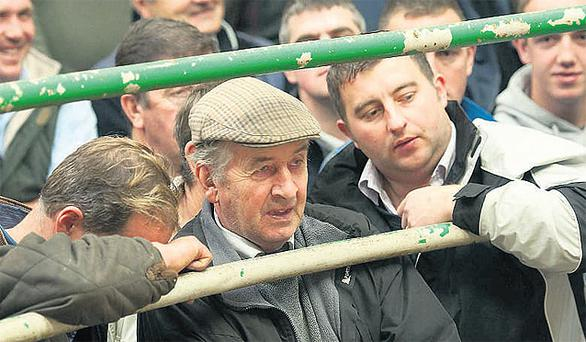 Farmers watch closely as the stock goes through the auction rings during the Ballybofey and Stranorlar Mart weanling show and sale