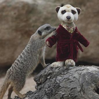 'Simples' made it into a dictionary courtesy of Aleksandr the Meerkat from a price comparison website ad