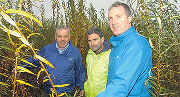 Pat Farrelly, of Farrelly Brothers, Kevin Johnson and Teagasc Oakpark's Gary Caslin look at some of the willow crops during the Farrelly Willow Open Day in Kells, Co Meath
