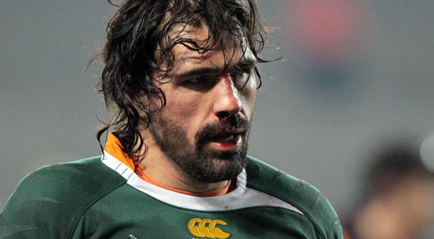 Victor Matfield. Photo: Getty Images