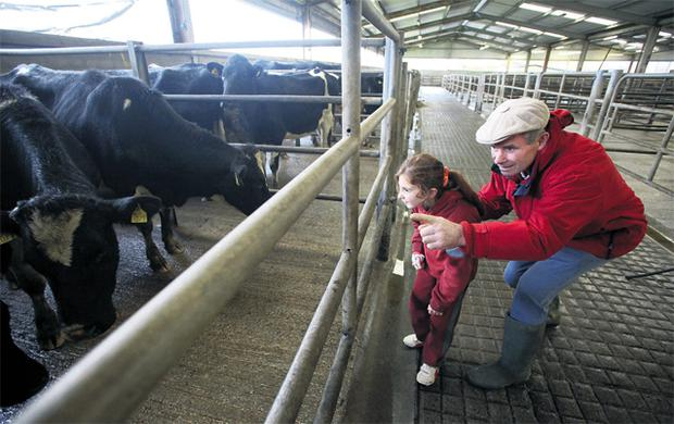 Ted O'Sullivan, Bansha, Co Tipperary, shows Julie Brennan some of the heifers at Bóthar's Roscrea collection point