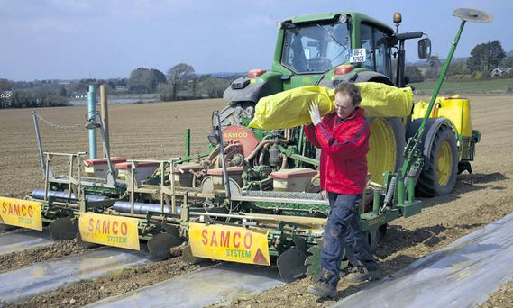 The varieties of the crop have progressed to the extent that not only can it be grown almost anywhere in the country under plastic, but more growers are now looking at sowing the crop without the use of plastic at all