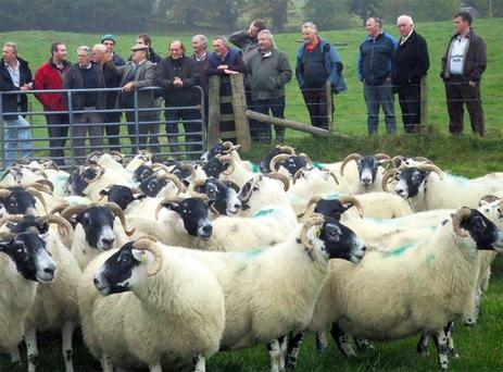 Mayo hill farmers listen to Scottish farmer Tom Patterson explain how he built up his flock