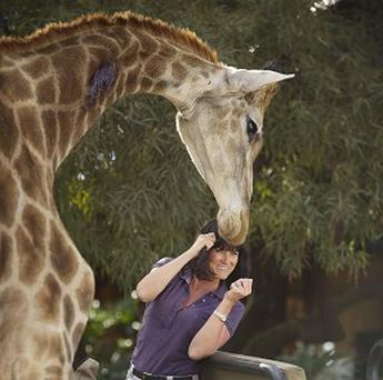A thunderstorm has killed seven-year-old giraffe Hamley on Monday