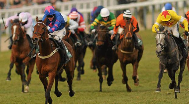 Cue Card, with Joe Tizzard up, on their way to winning the Weatherbys Champion Bumper. Photo: Stephen McCarthy / Sportsfile