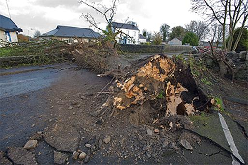 A fallen tree comes down next to a school just before closing time in Claregalway, Co Galway