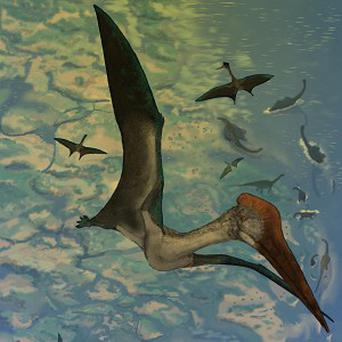 Scientists have found new evidence that pterosaurs 'pole-vaulted' themselves into the sky