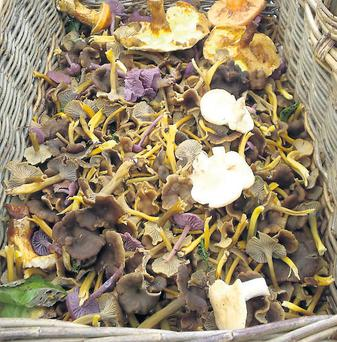 Grow mushrooms for some extra income