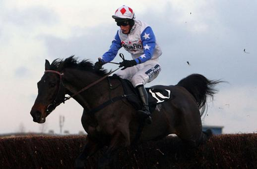 Diamond Harry and jockey Daryl Jacob negotiate the final fence on the way to landing the Hennessy Gold Cup at Newbury on Saturday - the winner could now head to Leopardstown for the Lexus Chase at Christmas. Photo: PA