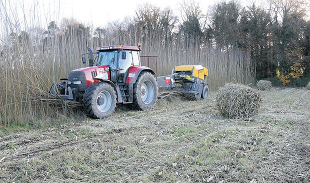 Teagasc Oakpark puts on a display of willow baling at its bioenergy open day