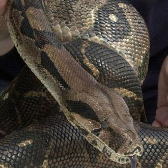 UAE police have held a man who carried a bag full of snakes on plane