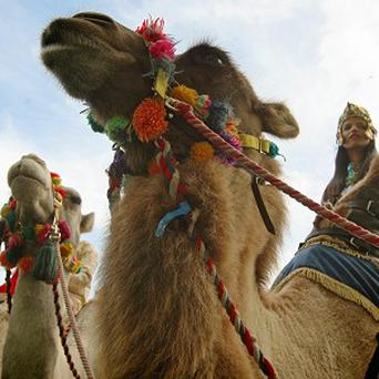 A Scots village is to be transformed into Bethlehem in the run-up to Christmas - complete with live camels