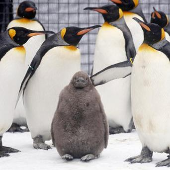 A shopping centre cancelled a live penguin show after fears animal rights protesters may stage a demonstration