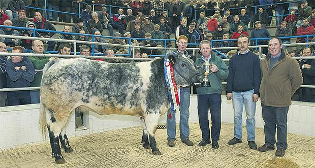 Owner John Cullinane, Ballineen, Co Cork; mart chairman Pat Fitzgerald; Mark Sweetman of buyers Charleville Foods; and Derry Connolly, Drinagh Co-op, show the Skibbereen supreme champion, a Belgian Blue-cross heifer, which sold for €2,000