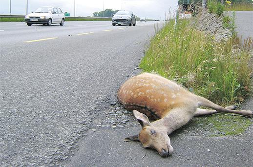 Deer are causing serious harm to agricultural and horticultural crops and domestic gardens in many counties areas, in addition to posing a risk to road users
