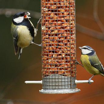 Spending five minutes listening to birdsong may help beat the winter blues, scientists say