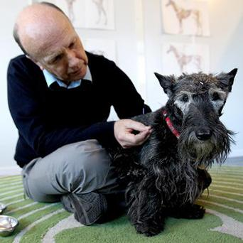 Vet Robert Wallace with Heather the dog after she regained her health through acupuncture