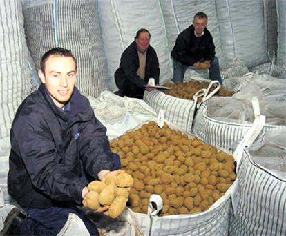 Surplus potatoes from Ireland are being shipped to Russia, with prices strengthening last month. Inspecting the spuds prior to shipping were Philip Meade, Chris McKeever and Robert Devlin