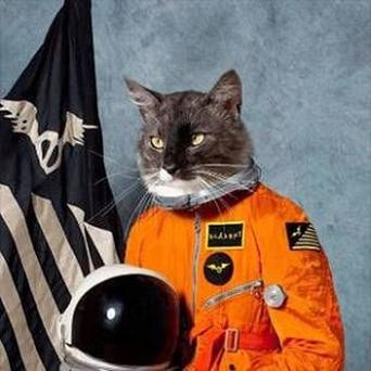 The Klaxons' cover art was named the best of 2010