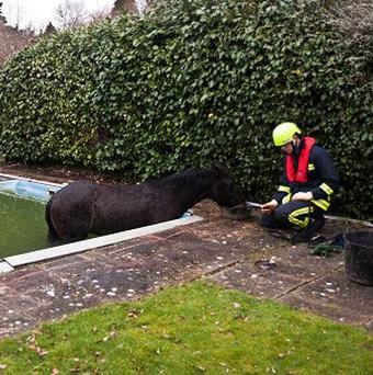 Four-year-old gelding Mischief walked on to a swimming pool's plastic covering in Godshill, New Forest