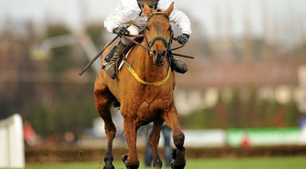 Lexus Chase winner Pandorama ridden by Paul Carberry. Photo: Barry Cregg / Sportsfile