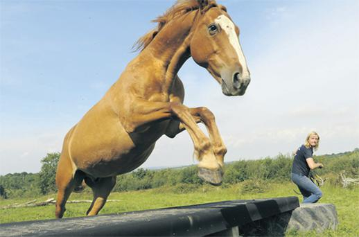 Horse Agility founder Vanessa Bee gets a horse to jump at liberty at her equine centre in England
