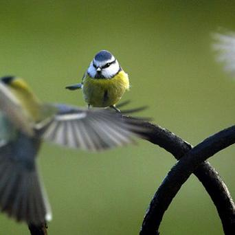 The mayor of Lancaster, California, wants to broadcast recorded bird songs to the city's streets