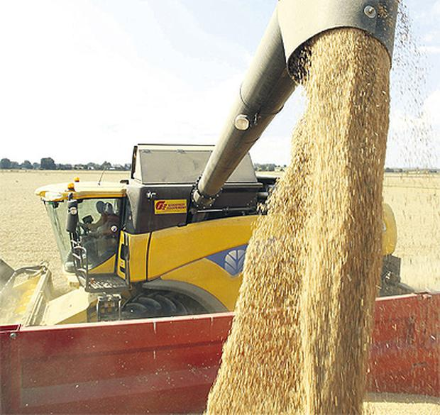 Grain continues to trade strongly and wheat delivered in May hit €240/t last week