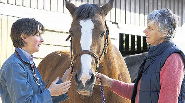 Of the 10pc of unvaccinated horses that survive tetanus, intensive veterinary treatment