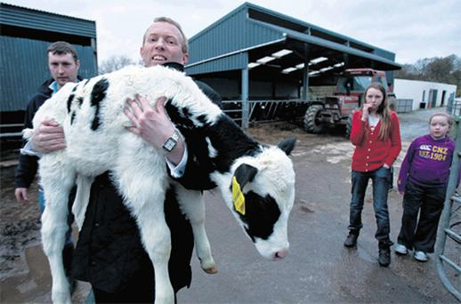 Timmy Dooley helps Kevin O'Halloran and his children Chloe and Edith with a calf while canvassing in Mountshannon