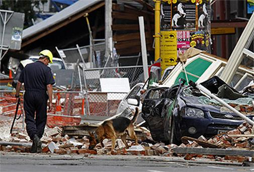 A police dog searches in the rubble with his handler in Christchurch. Photo: AP