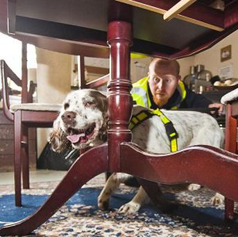 Mouse detection dog Archie with handler Alan Johnson