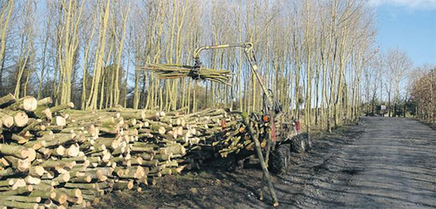 Proper thinning is vital to make the most of your timber crop
