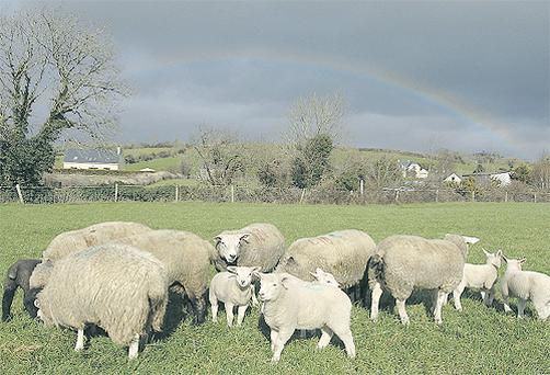 Famers should enlist help to draft a flock health plan specific to their farm