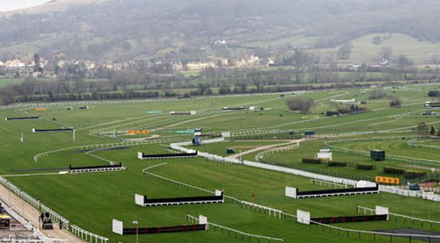 A view of the straight at Cheltenham racecourse yesterday where the going is currently reported to be soft. Photo: PA