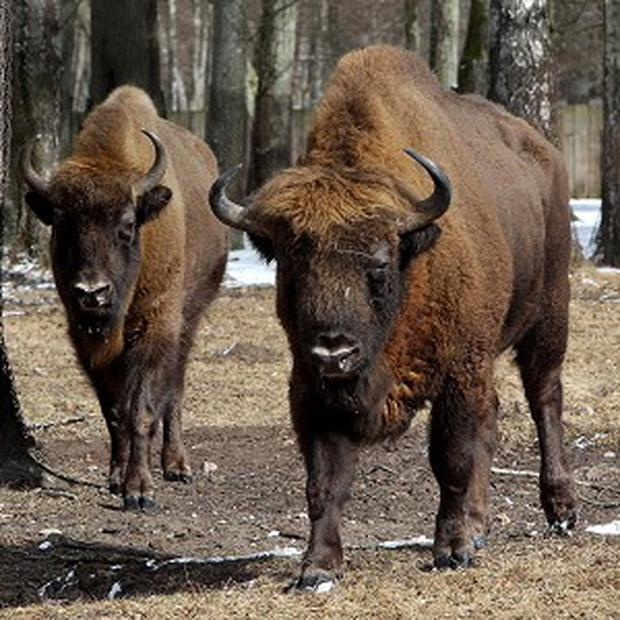 A sheriff in South Dakota has been ordered to look after 6,000 bison