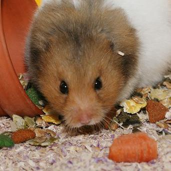 A New York City teenager has been arrested following the death of a younger sibling's hamster