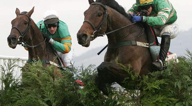 Riding high: Nina Carberry and Grand Champetre (right) head to the Cheltenham Festival with a strong chance of success. Photo: Getty Images