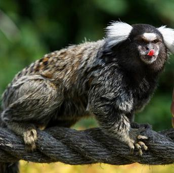 A woman walked into a US courthouse with a marmoset monkey in her bra