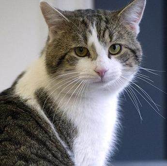 A cat can detect when her owner is about to have an epileptic fit