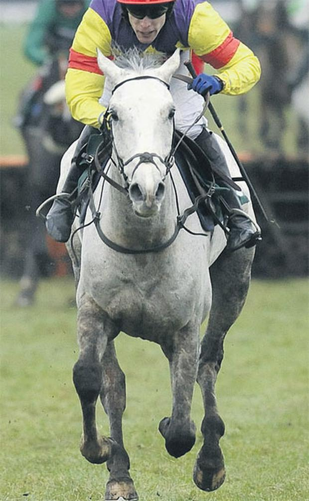 Grand Crus has already shown a liking for the Cheltenham hill this season and the grey trained by David Pipe can upset the best-laid plans of Paul Nicholls who sends out favourite Big Buck's.