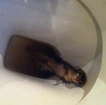 The squirrel entrepreneur Duncan Goose found in his toilet in Malawi (Global Ethics Limited)