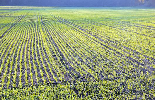 Crops are just getting into their stride as soil temperatures improve