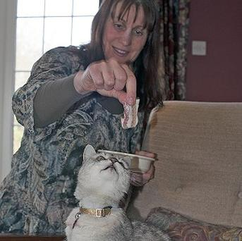 Smokey the cat eyes up some bacon dangled by owner Ruth Adams