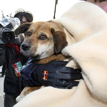 Ban the dog was rescued from drifting debris, and has been reunited with her owner (AP)