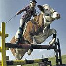 Regina Mayer jumps with her cow Luna over a hurdle in Laufen, southern Germany