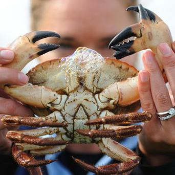 Mutant crab Claude has an extra set of pincers