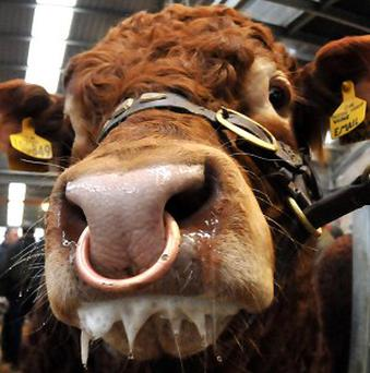 Three bulls made a bid for freedom from an Idaho rodeo show